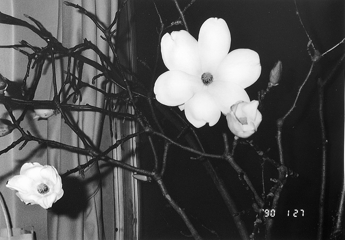 Nobuyoshi Araki, Flower